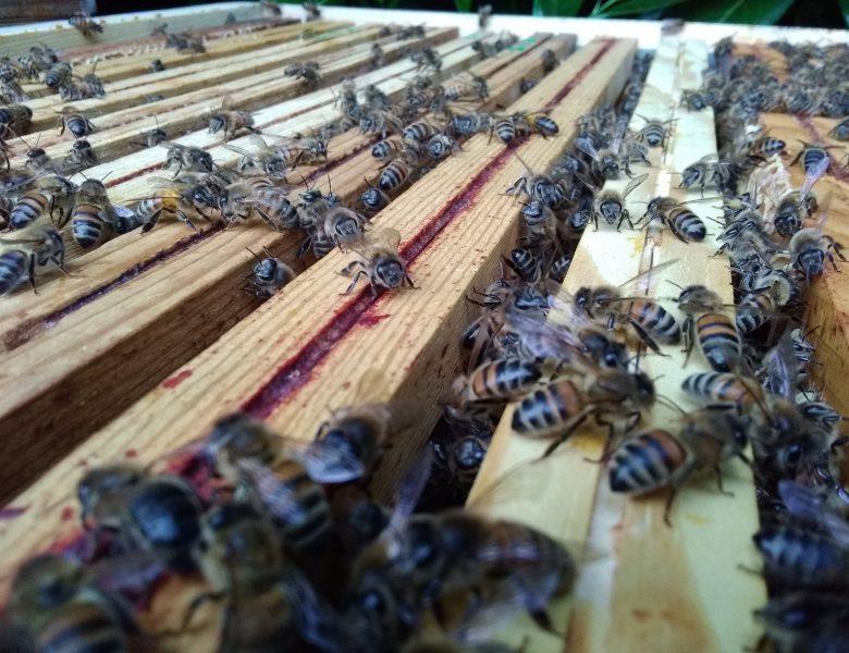 Info confinement apiculture